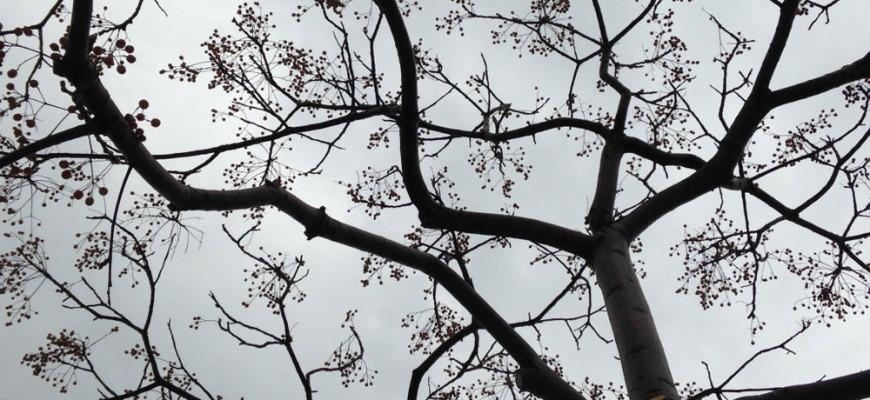Trees-MA